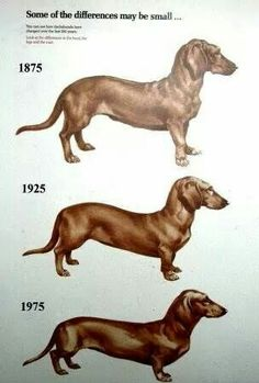 A pictorial view of how the mini doxi changed over a 100 year period.
