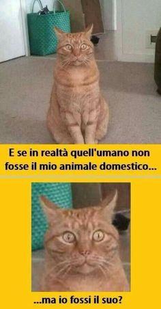 meme-italiano-immagini-per-ridere-9570