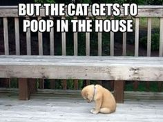 Another cute puppy meme.  Why is that by the way?  But The Cat Gets To Poop In The House