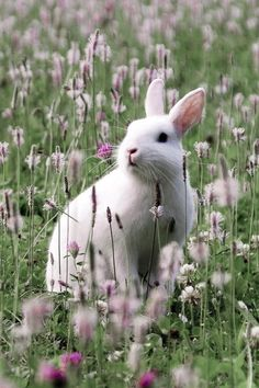 If I had a field to share with rabbits, I would be happy, but sharing my small city garden tries my patience when they eat all the newly leafed plants every spring.