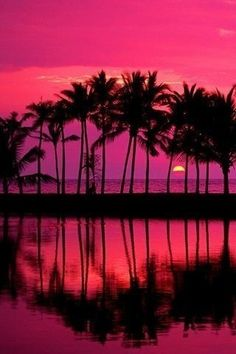 A Palm Trees at Sunset | Home