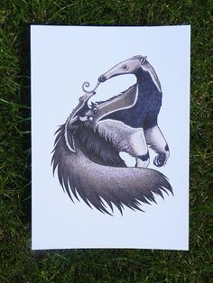 Anteater & Baby Illustration - A4 Print White Laid Card 340gsm