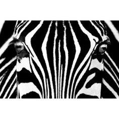 Fotomurales - Mini Mural Zebra