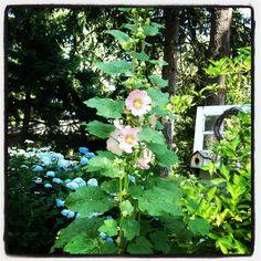 Hollyhocks, hydrangeas and the door to nowhere