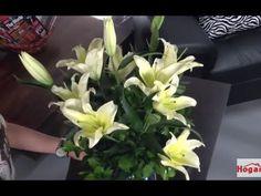 Como hacer un Arreglo floral  a base de Lirios- Hogar Tv  por Juan Gonza...