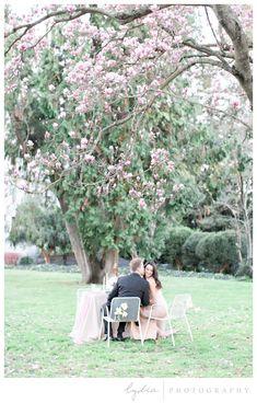 California State Capitol Wedding   #springwedding #sacramentowedding #sacramentoweddingphotographer #capitolwedding California State Capitol, Sacramento State, Sacramento Wedding Photographers, Magnolia Trees, Spring Wedding, Bloom, Tours, Photography, Inspiration
