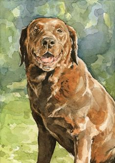 Draw Portrait brown lab watercolor painting - A custom watercolor painting of your dog. Detailed and realistic watercolor portrait. Animal Paintings, Animal Drawings, Watercolor Portraits, Watercolor Paintings, Watercolors, Tier Fotos, Watercolor Animals, Dog Portraits, Dog Art