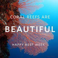 Happy Coral Reef Awareness Week!