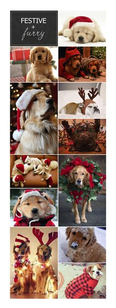Christmas dogs! Puppies in flannel, reindeer antlers and santa hats.