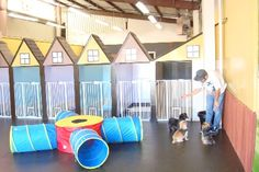 Doggy Day Care and Dog Boarding. Fun Caring and Safe in the East Bay in San Leandro close to Hwys 880, 238,580, BART & Oakland Airport