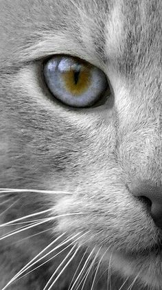 Beautiful cat eye - schitterend kattenoog