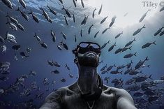 """Photo Of The Week: """"Amongst your best mates"""" by @mr_tilford.  Find out more about our #VividPixFix Photo Of The Week at http://ift.tt/2Bibszo or via the link in our bio above.  #deeperblue #deeperbluephoto #diving #freediving #freediver #freedive #onebreath #apnea #breathhold #underwater #uwphotography #underwaterlife #freedivingphotography #underwaterphoto #underwaterphotography #photooftheweek http://ift.tt/2mUZapE"""