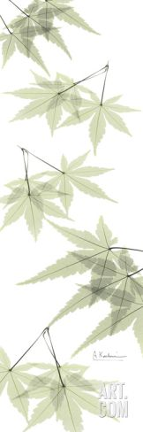 Leaves in Green Art Print by Albert Koetsier at Art.co.uk