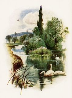 This lovely vintage image features three swans swimming on a pond. There is a creek flowing, along a cluster of trees, into the pond. More trees, a mountain and a bird in flight are in the distant …