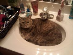 My cat Boston, yeah she's a little plump!
