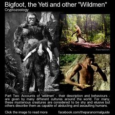 "Bigfoot, the Yeti and other cryptid ""Wildmen"", Part Two ""The Orang Pendek, a smaller version of Bigfoot that is said to inhabit rainforests in Sumatra, is said to be highly intelligent yet fearful of Men, preferring to hide and watch humans from bushes and foliage."" Read more here: http://www.theparanormalguide.com/blog/bigfoot-the-yeti-and-other-cryptid-wildmen-part-two"