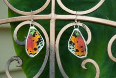 FREE SHIPPING  Real Sunset Moth Wings Encased in hand Cut