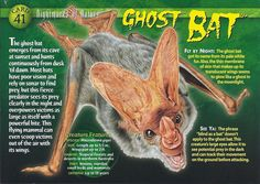 Name: Ghost Bat Category: Nightmares of Nature Card Number: 41 Front: Ghost Bat Nightmares of Nature Card 41 front Back: Ghost Bat Nightmares of Nature Card 41 back Trading Card: Bat Animal, Animal Facts, Creepy Facts, Wtf Fun Facts, Monster Book Of Monsters, Interesting Animals, Extinct Animals, Wild Creatures, Cryptozoology