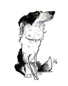 Pet Portrait Spotlight: Border Collie