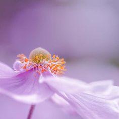 Fine art photography print 8x8 purple photo by mylittlepixels