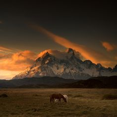 Welsh photographer Andy Lee captured these Beautiful Landscape Photography of Patagonia. Patagonia is a sparsely populated region tucked into the southern tip Pretty Horses, Horse Love, Beautiful Horses, Horse Photography, Landscape Photography, Nature Photography, Mountain Photography, Photography Tips, Scenic Photography