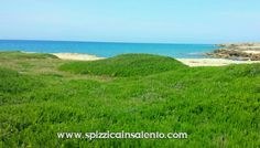 Il Rosmarino respira l'aria del mare ...questo è il #Salento