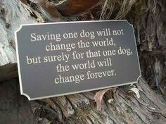 Often have to remind myself of this when I get frustrated about not being able to save more animals (yet)