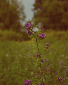 #Trenčín#Príroda#Slovak#Foto#Fotografovanie#Photo#Krajina#Stromy#Les#Landscape <3