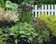 astilben und funkie bl te und blatt pinterest grisu pflanzen und garten pflanzen. Black Bedroom Furniture Sets. Home Design Ideas