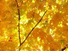 Fall - Bing Images