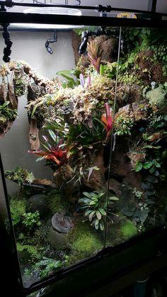 Terrarium Tank, Gecko Terrarium, Orchid Terrarium, Terrarium Reptile, Terrarium Plants, Reptile Habitat, Reptile Room, Les Reptiles, Reptiles And Amphibians