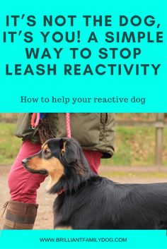 Dog Behavior Reactive or aggressive dog? See how a few simple changes can make a dramatic difference to the quality of your dogwalks Reactive Dog, Dog Minding, Easiest Dogs To Train, Look Here, Aggressive Dog, Border Terrier, Welsh Terrier, Terriers, Dog Barking