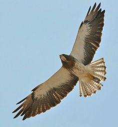 VRIJ ALS EEN VOGEL, ———————————— Vrij Als een vogel in de lucht Dat hoort bij mij In vrije vlucht. Zonder ketenen die mij bin…