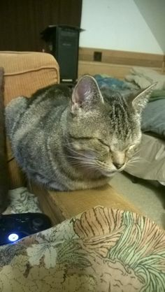 Happy Couch Loaf - credit to: swipurr.com