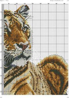 Tiger 4.6