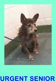 JACKIE (A1675464) I am a female black and white Terrier. The shelter staff think I am about 12 years old and I weigh 8 pounds. I was found as a stray and I may be available for adoption on 01/31/2015. — Miami Dade County Animal Services. https://www.facebook.com/urgentdogsofmiami/photos/pb.191859757515102.-2207520000.1422579576./917208758313528/?type=3&theater