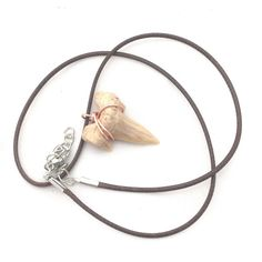 Real Shark Tooth Necklace / Little Boy Gift by CrystalSensation