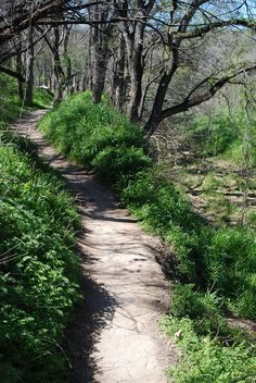 The Barton Creek Greenbelt is fantastic for mountain biking with all of it's hidden breakout trails. We estimate about 40 miles of trails, but many of them are require better-than-average bike handling skills. It's a great trail for a 1 hour mtn bike ride or a 4 hour mtn bike ride!