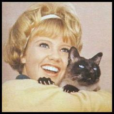 """Syn cuts his chops in 1963's The Incredible Journey, but it was his ballsy portrayal of """"Darn Cat"""" in That Darn Cat that led The New York Times to declare this Seal Point Siamese the Clark Gable* of felines. (*That equates to George Clooney in 2012's celebrity market)"""