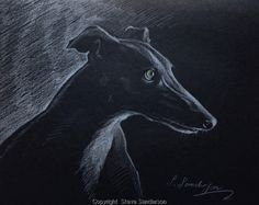 Greyhound Study by Steve Sanderson - Got this one in my collection