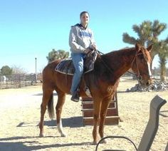 UPDATE Shandy has been adopted  Wicked Mood (Shandy) adoptable Thoroughbred $500