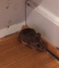 #mouse