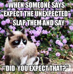 5 Powerful Clever Tips: Grumpy Cat Morning cat room bathroom.Grumpy Cat New Year. Grumpy Cat Quotes, Grump Cat, Funny Grumpy Cat Memes, Cat Jokes, Funny Memes, Funny Cat Quotes, Cat Cat, Animal Humour, Funny Animal Jokes