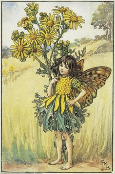 Illustration for the Ragwort Fairy from Flower Fairies of the Summer. A girl fairy stand with one hand on her hip, the other round a ragwort flower.  										   																										Author / Illustrator  								Cicely Mary Barker