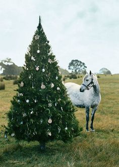 A Horse and his Christmas tree!