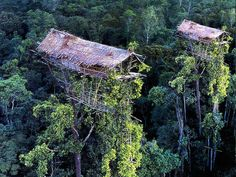 The Korowai people in Papua New Guinea build their houses up to 100 feet above the ground High above the forest floor, deep in the swampy lowland jungles of Papua, tree houses greet the eyes of explorers trekking into what remains one of the last remote corners of the globe.