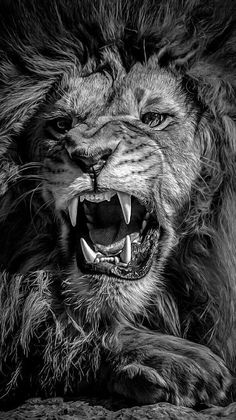 Dem preach religion while dem heart is hollow Its that season again… Tighteni… - Tatuering Lion Live Wallpaper, Animal Wallpaper, Lion Images, Lion Pictures, Lion Eyes, Lion Tattoo Sleeves, Lion Photography, Lion Head Tattoos, Lions Photos