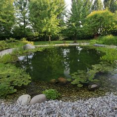 30 Natural Pond And Swimming Pool Designs For Relaxing Natural Swimming Ponds, Natural Pond, Swimming Pools Backyard, Ponds Backyard, Swimming Pool Designs, Lap Pools, Backyard Shade, Indoor Pools, Pool Decks