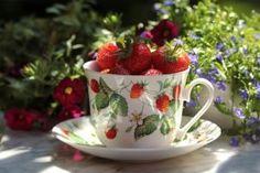 Akinek van egy erkélye, vagy kertje okvetlenül ültessen szamócát a kertjébe, mert egy könnyen gondozható és nagyon finom gyümölcsről van szó. Megmutatjuk, hogyan kell a szamócát  úgy gondozni és ápolni, hogy bő terméssel hálálja meg a gondoskodást.