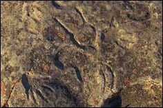A 'pecked' human hand (bottom left) and other petroglyph images at St. Packing List For Travel, Prehistoric, Rock Art, Traditional Art, Bucket, Image, Places, Fotografia, Pictures